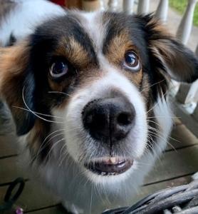 house dog security